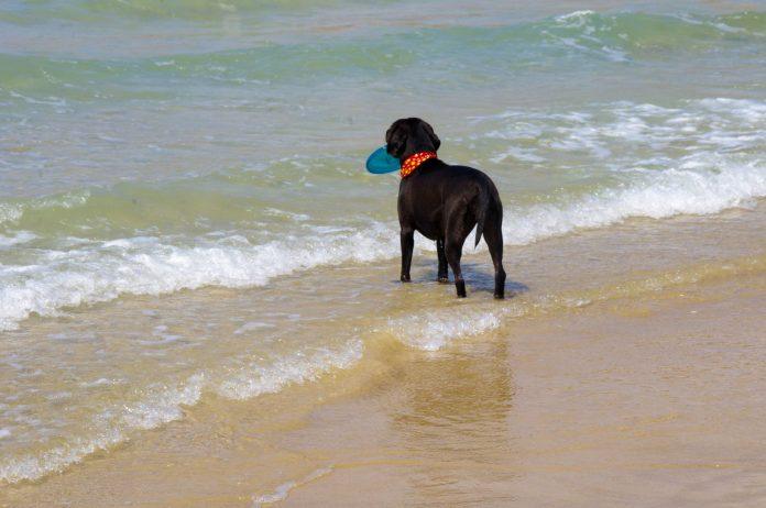 דרכים להקל על בעלי כלבים ובעלי חיים אחרים